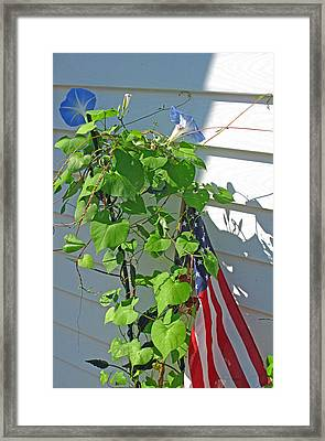 Old Glory With Morning Glorys Framed Print