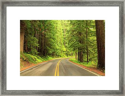 Old Growth Forest At Grove Framed Print