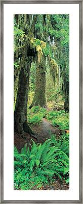 Old Growth Forest At Washingtons Framed Print by Panoramic Images
