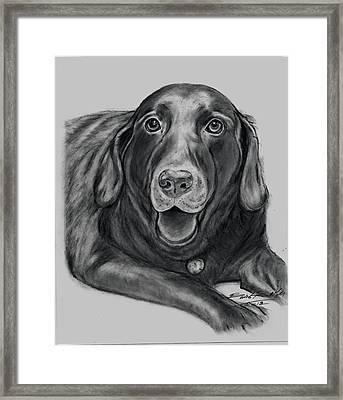 'old Gus' Framed Print by Barb Baker
