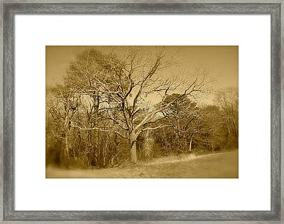 Old Haunted Tree In Sepia Framed Print
