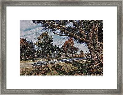 Old House And The Trees Framed Print
