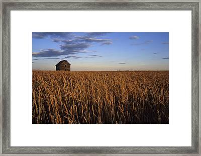 Old House In Wheat Field, Saskatoon Framed Print