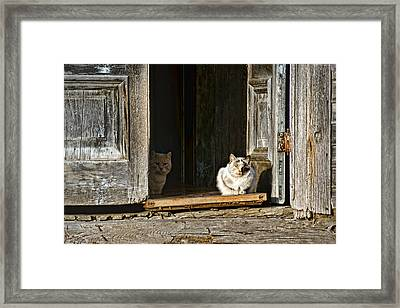 Old Knox Church Cats Framed Print by Nikolyn McDonald