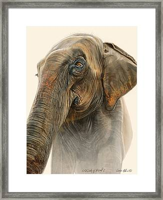 Old Lady Of Nepal 2 Framed Print by Aaron Blaise