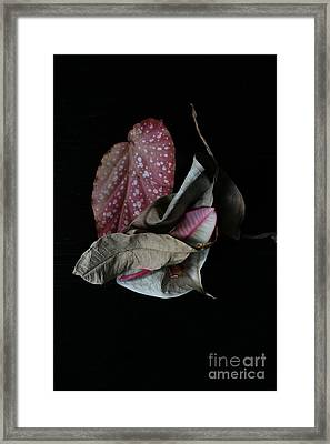 Old Leaves. Framed Print by Tanya Polevaya