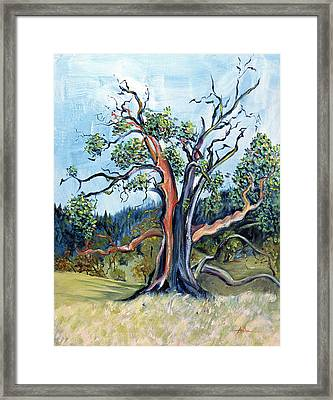 Framed Print featuring the painting Old Madrone Tree In November  by Asha Carolyn Young