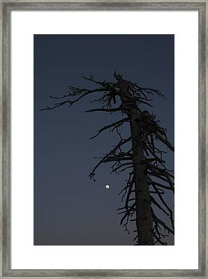 Old Man And Moon Framed Print