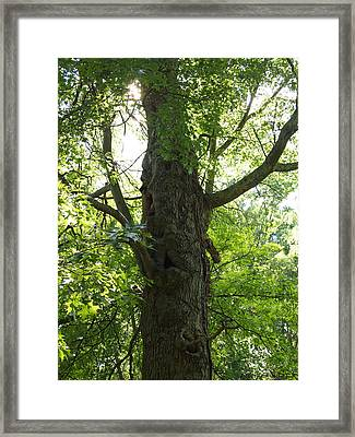 Framed Print featuring the photograph Old Man Of The Forest by Deborah Fay