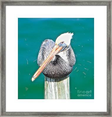 Old Man Pelican On Anna Maria Pier Framed Print