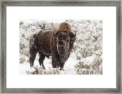 Old Man Winter Framed Print by Sandy Sisti
