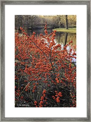 Old Mine Park In Winter Framed Print