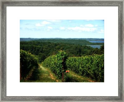 Old Mission Peninsula Vineyard 2.0 Framed Print by Michelle Calkins