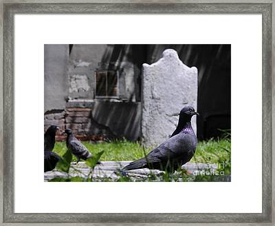 Old Nyc Jewish Cemetery  Framed Print by Bob Stone