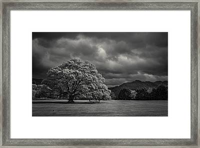 The Old Oak And The Crow Framed Print