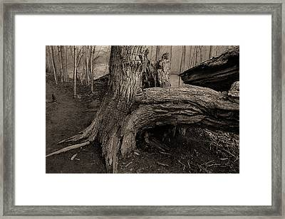 Old Oak 2 Framed Print
