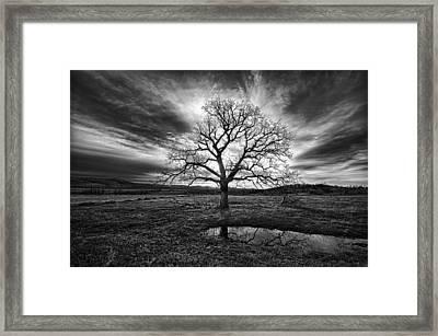 Old Oak Framed Print by Aaron Thompson