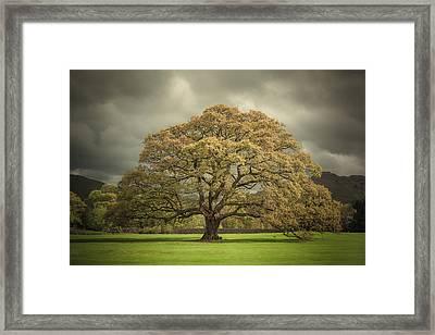 The Old Oak Of Glenridding Framed Print by Chris Fletcher