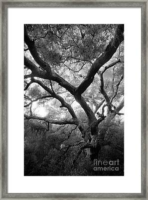 Old Oak II Framed Print