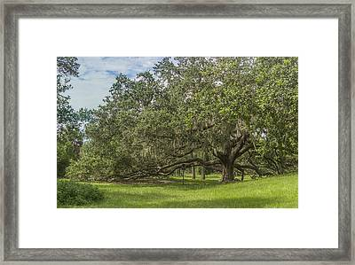Framed Print featuring the photograph Old Oak Tree by Jane Luxton