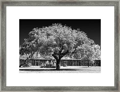 Old Oak Tree Mission San Jose Framed Print by Christine Till