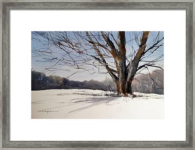 Old Oak White Road Framed Print by Sandra Strohschein