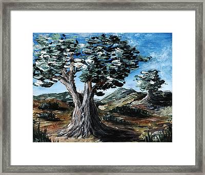 Old Olive Tree Framed Print by Anastasiya Malakhova