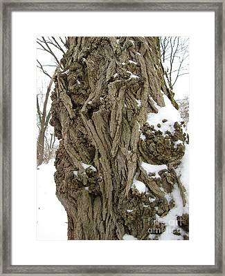 Framed Print featuring the photograph Old Ones by Melissa Stoudt