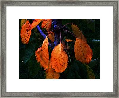 Old Orange Leaves Framed Print