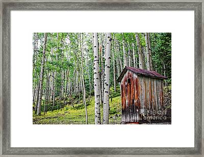 Old Outhouse Among Aspens Framed Print