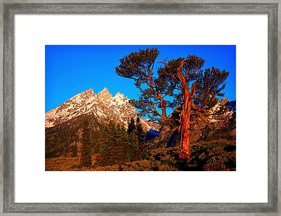 Framed Print featuring the photograph Old Patriarch by Aaron Whittemore