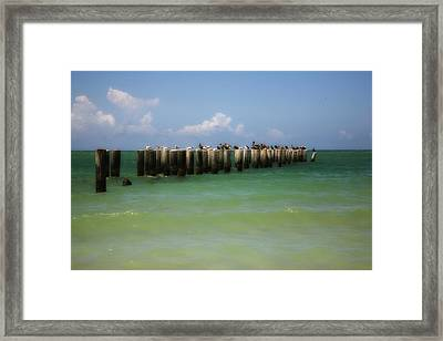 Old Pier  Naples Bay Framed Print by Carol Kinkead