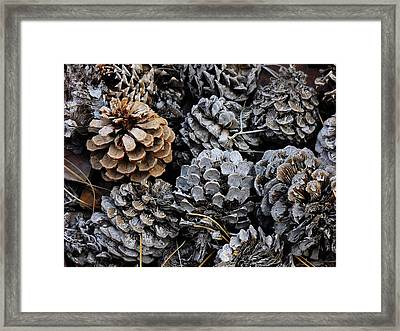 Old Pinecones Framed Print by Kae Cheatham