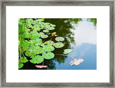 Old Pond - Featured 3 Framed Print