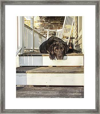 Old Porch Dog Framed Print by Diane Diederich