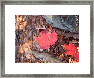 Old Rag Hiking Trail - 121216 Framed Print