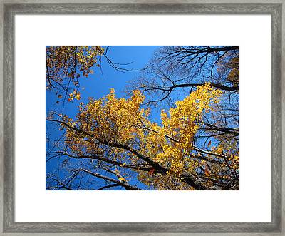 Old Rag Hiking Trail - 121217 Framed Print by DC Photographer