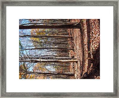 Old Rag Hiking Trail - 12122 Framed Print by DC Photographer