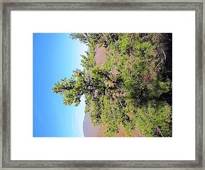 Old Rag Hiking Trail - 121225 Framed Print by DC Photographer