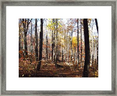 Old Rag Hiking Trail - 12124 Framed Print by DC Photographer