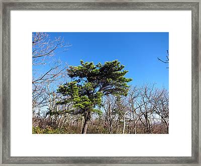 Old Rag Hiking Trail - 121242 Framed Print