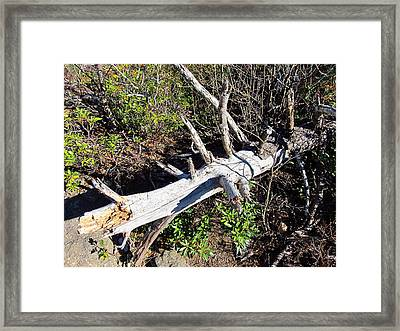 Old Rag Hiking Trail - 121243 Framed Print by DC Photographer