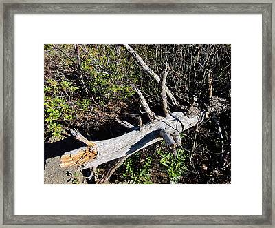 Old Rag Hiking Trail - 121244 Framed Print by DC Photographer