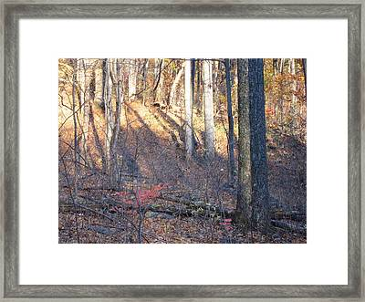 Old Rag Hiking Trail - 121263 Framed Print by DC Photographer