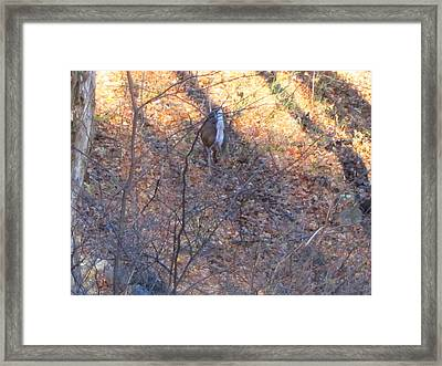 Old Rag Hiking Trail - 121264 Framed Print by DC Photographer