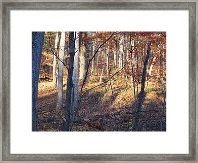 Old Rag Hiking Trail - 121266 Framed Print by DC Photographer