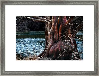 Old Red Devil Framed Print by Mike Feraco
