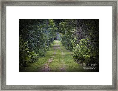 Old Road Through Forest Framed Print by Elena Elisseeva