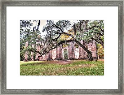 Old Sheldon Church - Bending Oak Framed Print