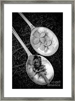 Old Silver Spoons Framed Print by Edward Fielding